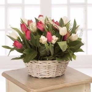 Корзина 25 разноцветных тюльпанов с зеленью R987
